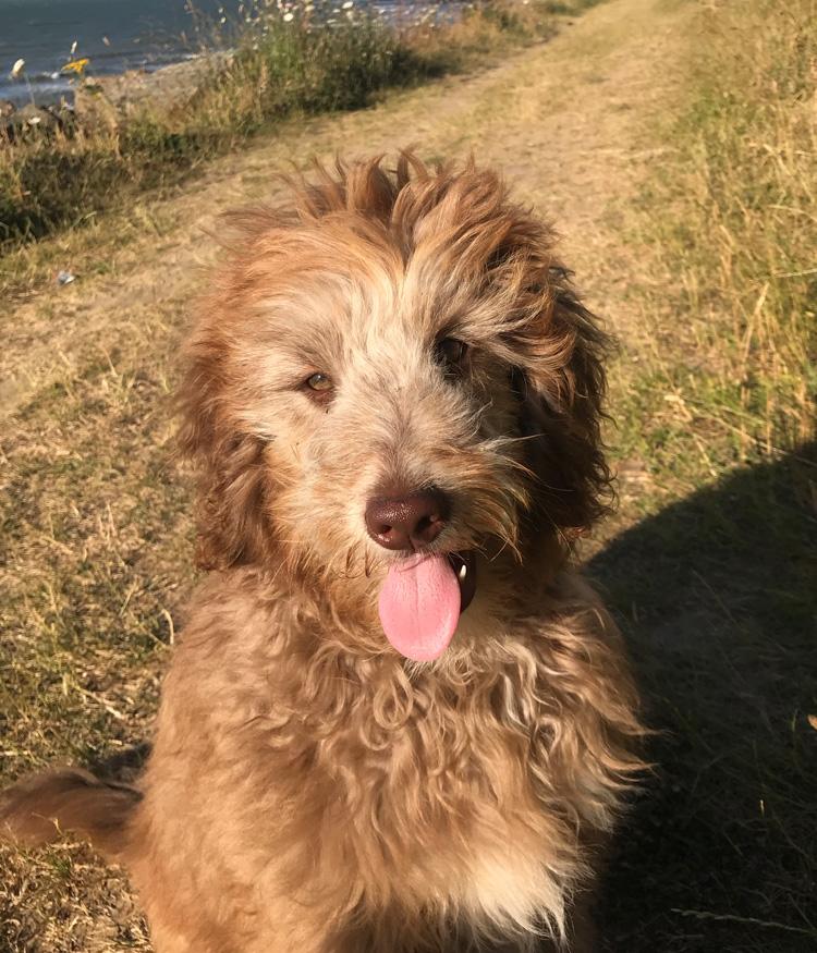 Alfie enjoying a dog walk