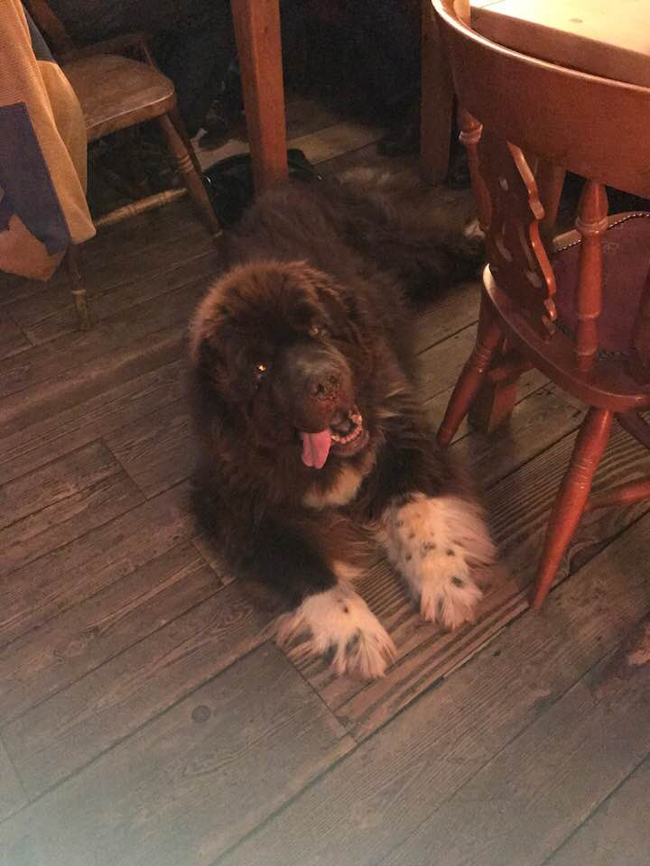 Woody the Newfoundland at a pub near Sandwich