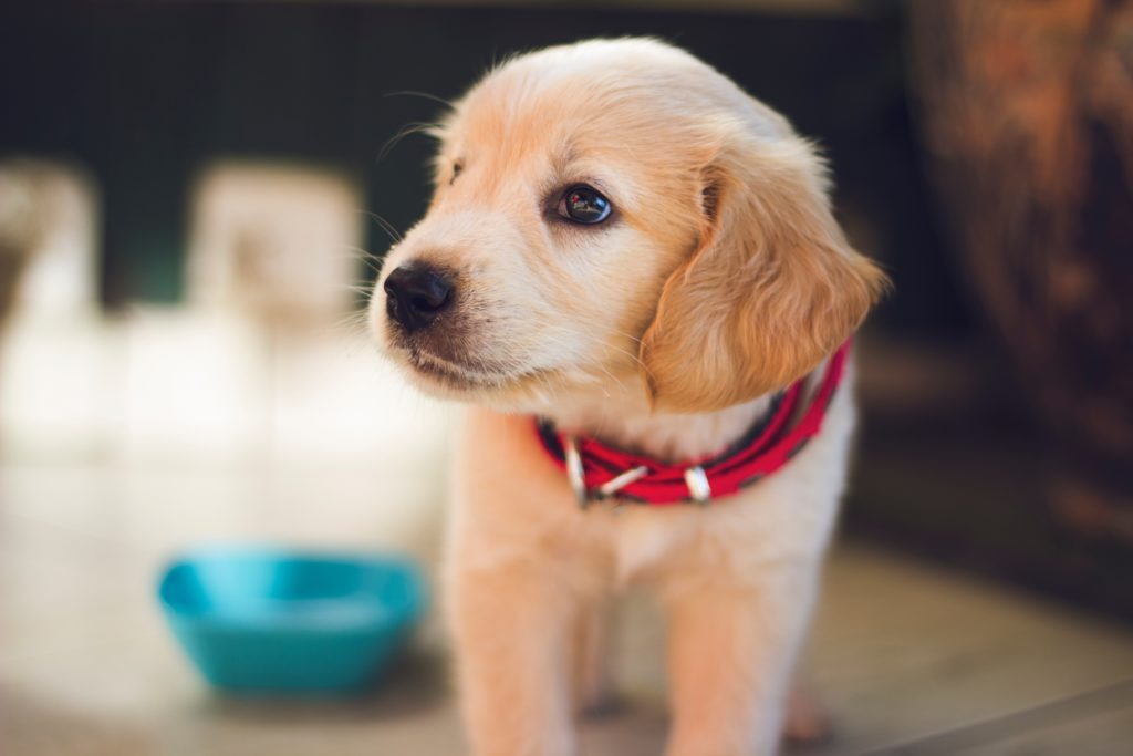 What to think about when getting a puppy