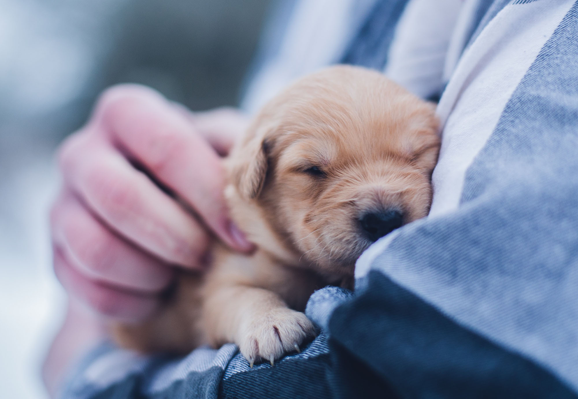 Things to consider when buying a puppy.