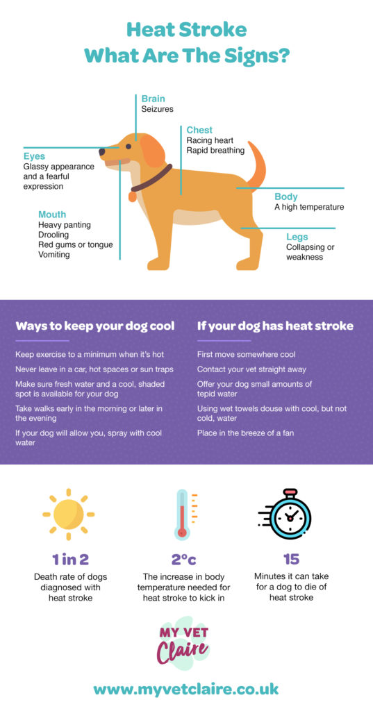 Heat stroke in dogs infographic