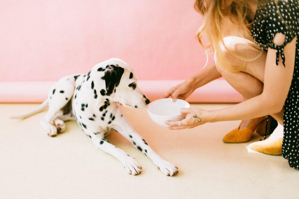 Is grain free dog food bad?
