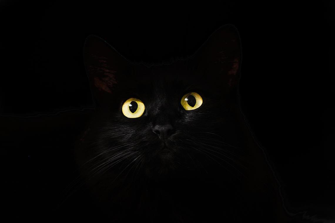 Spooky Cats Eyes