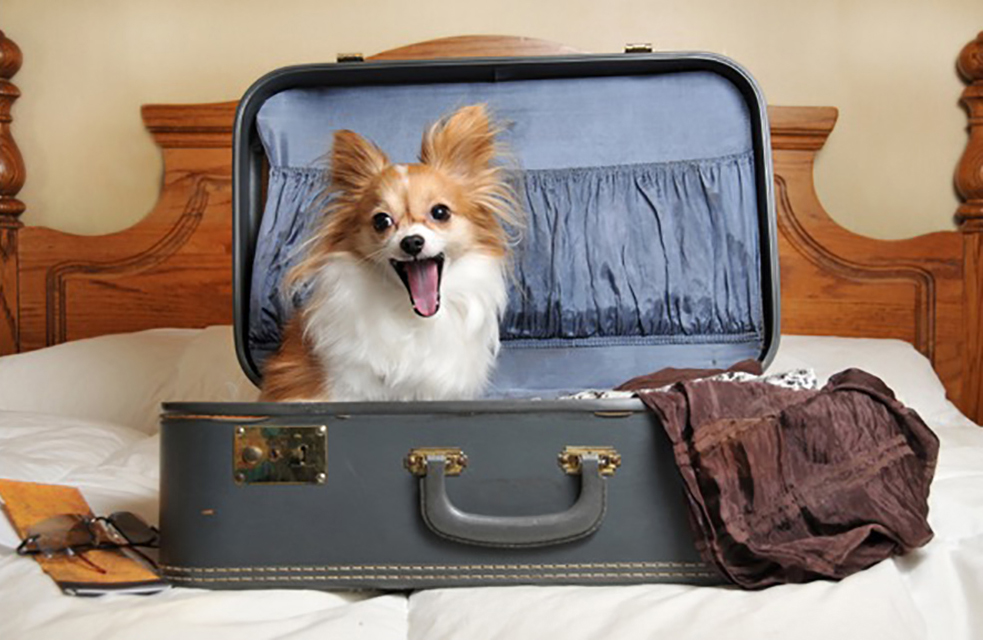 Live near Dover and plan on taking your dog on holiday?