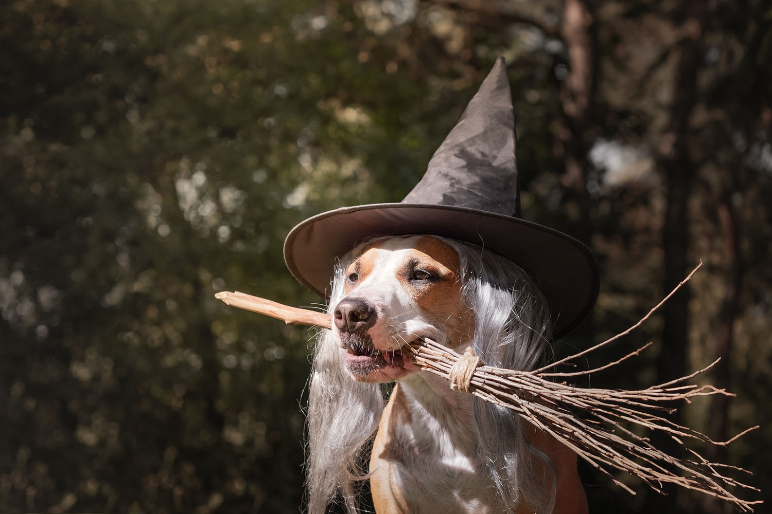 Vet advice for keeping your dog safe at Halloween